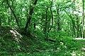 Сабарівський ліс, Городище.jpg