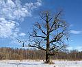 Сергиевка 2005 03 04.jpg