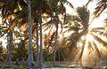 Сoco trees - panoramio.jpg
