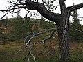 У подножья горы Нахкатундра. - panoramio.jpg