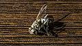 عکس از زوایای مگس مرده 01.jpg