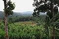 கொல்லிமலை - தோட்ட பகுதி - Kolli hills farmlands.jpg
