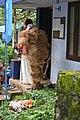 കുമ്മാട്ടി Kummattikali 2011 DSC 2751.JPG