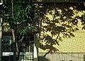 世尊院幼稚園前 - panoramio.jpg