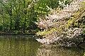 井の頭恩賜公園 Inokashira Imperial Park - panoramio.jpg