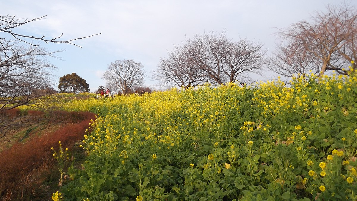 公園 吾妻 山