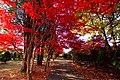 平岡樹芸センター(Hiraoka arboriculture center) - panoramio (8).jpg