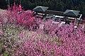 広橋梅林にて デッキテラス周辺の梅の花 Hirohashi-bairin (ume grove) 2014.3.22 - panoramio.jpg