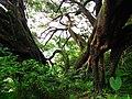 綠意 Foliage - panoramio.jpg