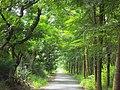 綠色隧道 - panoramio.jpg