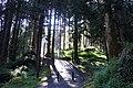 阿里山森林遊樂區 Alishan Forest Recreation Area - panoramio (7).jpg