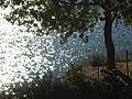 000562 - Lagunas de Ruidera (3997016679).jpg