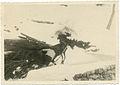 001 Vecchia mulattiera per l'Alpe - Ponte di Vigna - Uomo con mulo traina fascine di legno.jpg