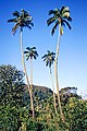 00 4358 Cook Islands in the South Pacific - Rarotonga.jpg