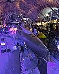 011 - Seaplane Museum, Tallin (37694823215).jpg
