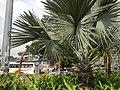 02354jfBalintawak Interchange Caloocan Quezon City FootbrindgeEDSA Roadfvf 04.jpg