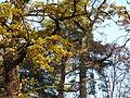 111120 Favoritepark-Herbst (1).JPG