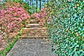 15-13-033, azalea trail - panoramio.jpg