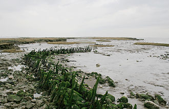 Canvey Island - A timber channel, and chalk and ragstone remains of the sea wall built c. 1622.