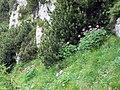 189-BPra alla Grigna 08 051.jpg