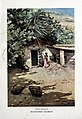 1901-06-22, Blanco y Negro, Recogiendo chumbos, García y Rodríguez.jpg