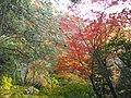 1 Minookōen, Minoo-shi, Ōsaka-fu 562-0002, Japan - panoramio (31).jpg