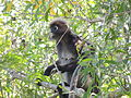 1 Monkey 4.JPG