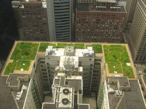 Urban heat island - Green roof of City Hall in Chicago, Illinois.
