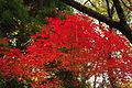 20091114 kirishima kouyou.jpg