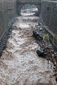 2010 Madeira floods and mudslides 15.jpg