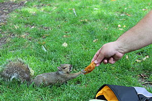 Environment (biophysical) - The ecosystem of public parks often includes humans feeding the wildlife.