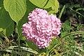 2014 Suchum, Ogród botaniczny (42).jpg