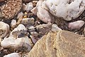 2015.07.11.-06-Mulde Eilenburg--Blaufluegelige Sandschrecke.jpg