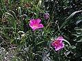 2016.07.09 15.29.33 DSC05256 - Flickr - andrey zharkikh.jpg
