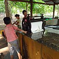 20200208 110645 Rubber plantation Bago Division, Myanmar anagoria.jpg