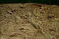 28 Psittacosaurus hatchlings.jpg