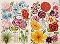 30th annual catalogue (1900) (20533025086).jpg