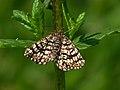 70.218 BF1894 Latticed Heath, Chiasmia clathrata (4672530790).jpg