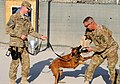 82nd Airborne Division leadership participates in military working dog demonstration DVIDS484878.jpg