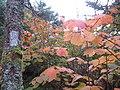 AT Blaze near Silers Bald, September 2014--Christine Hoyer (40380202531).jpg