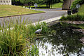 A Grey heron on Crematorium pond at the City of London Cemetery 02.jpg