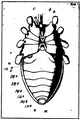 A monograph of the terrestrial Palaeozoic Arachnida of North America progress Page66 fig 67 frame.png