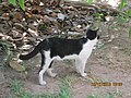 A stray cat in 'Tuol Sleng' prison campus..JPG