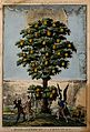 A tree bearing fruit labelled with virtues; representing the Wellcome V0007653.jpg