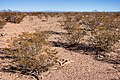 About two miles north-northeast of Cuchillo - Flickr - aspidoscelis (3).jpg