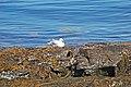 Acadia 2012 08 24 0110 (7958591342).jpg