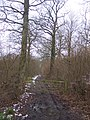 Access track into Stumble Wood - geograph.org.uk - 1711647.jpg