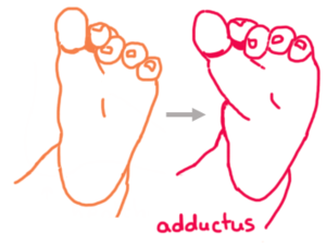 Adductus Illustration.png