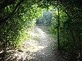 Adentrando a trilha da floresta.jpg