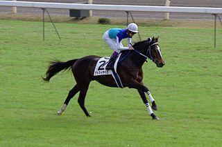 Admire Vega Japanese-bred Thoroughbred racehorse